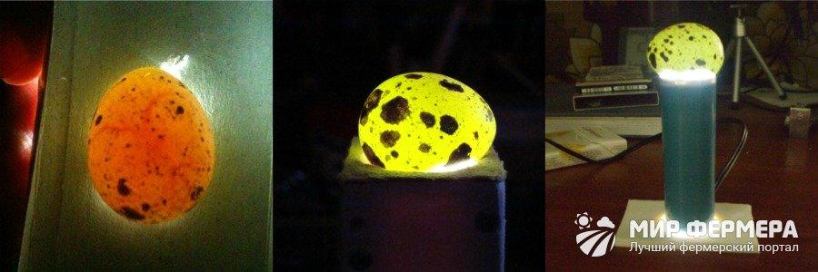 Овоскопирование яиц что это