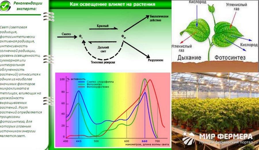 Значение света для растений