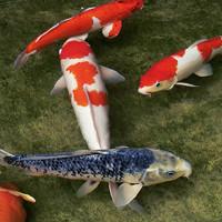 Пруд своими руками для разведения рыбы: как его правильно сделать || Как выкопать озеро для разведения рыбы