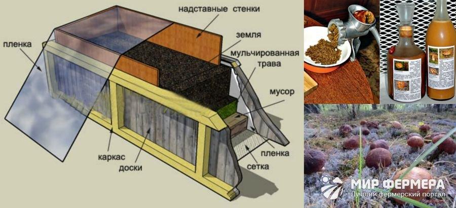 Способы выращивания белого гриба в домашних условиях