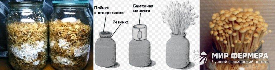 Как выращивать опята