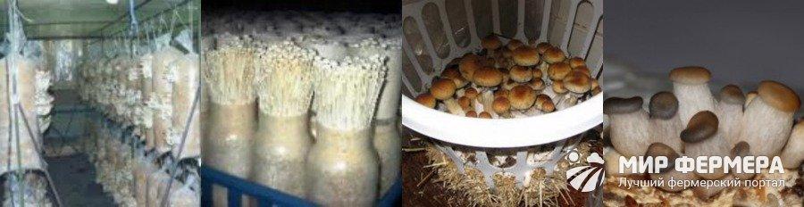 выращивание опят в домашних условиях видео
