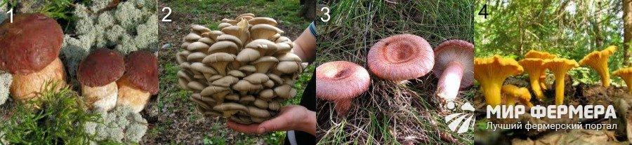 Съедобные грибы описание