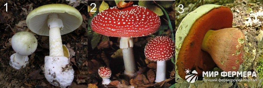 Несъедобные грибы фото и названия
