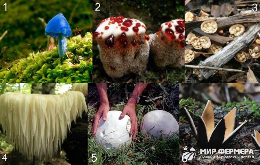 Необычные грибы мира фото и описание