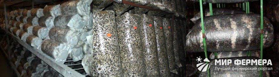 Формирование грибных блоков вешенки