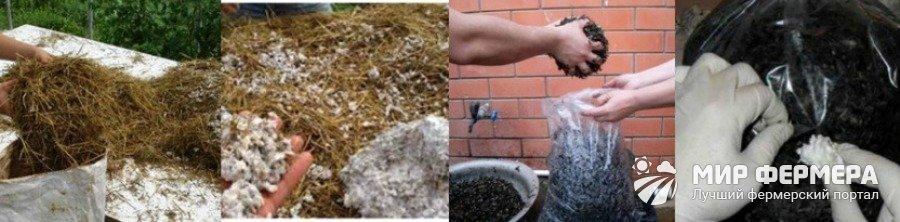 Посев мицелия вешенки в домашних условиях