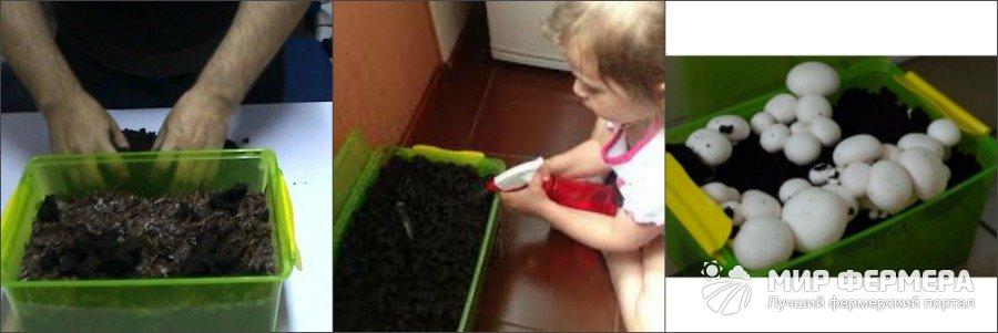 Как вырастить шампиньоны в квартире