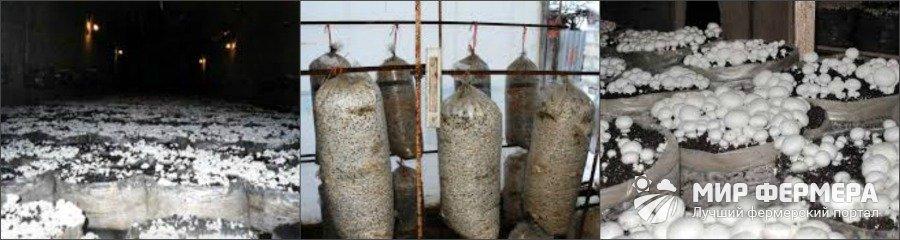 Выращивание шампиньонов в мешках