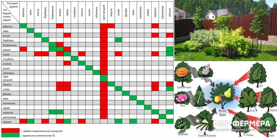 Совместимость плодовых деревьев таблица