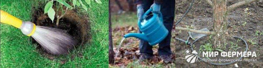 Как правильно поливать кусты