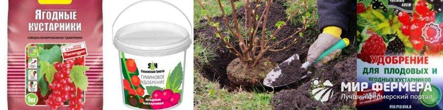 Удобрения для ягодных кустарников
