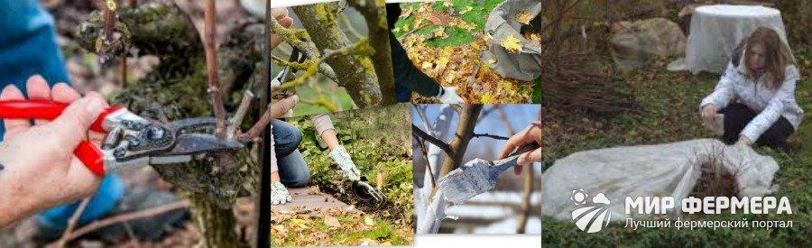 Уход за кустарниками в саду осенью