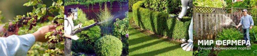Как ухаживать за кустарниками летом