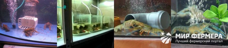 Разведение раков в аквариуме