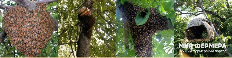 Размножение пчел в природе