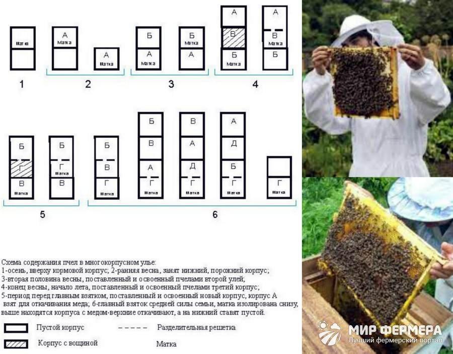 Разведение пчел ротационным методом