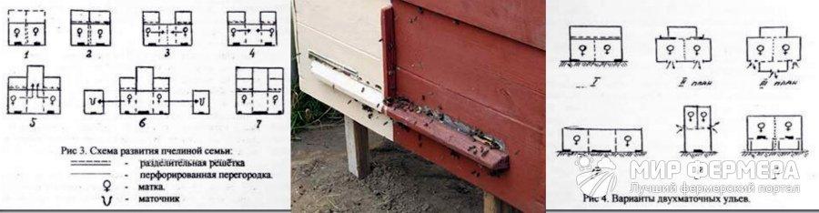 Разведение пчел двухматочным содержанием