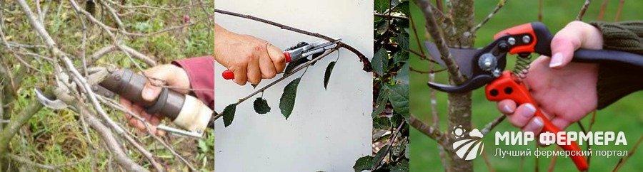 Как правильно обрезать вишню осенью