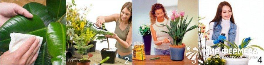 Как ухаживать за цветами в доме