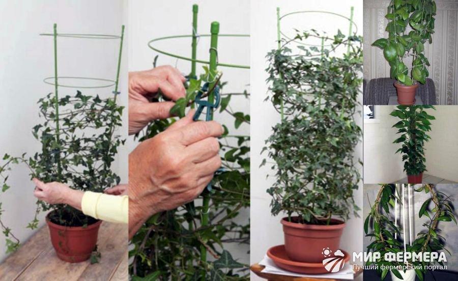 Опоры для комнатных растений своими руками