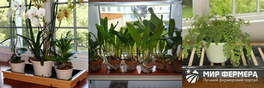 Как выбрать горшок для комнатных растений