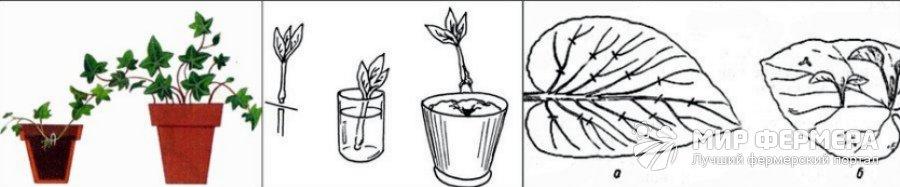 Как размножить комнатные растения