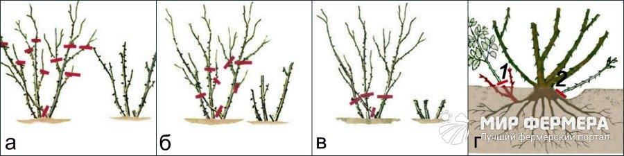 Типы обрезки садовых роз
