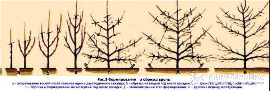 Как правильно делать формирующую обрезку груши Сайт о саде 90
