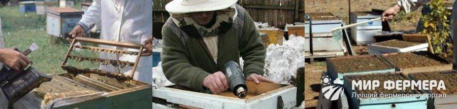 Как лечить нозематоз у пчел