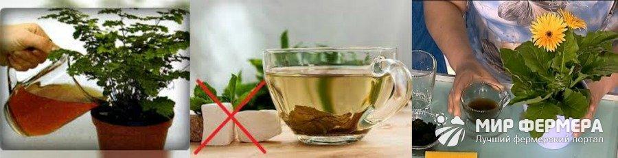 Можно ли поливать комнатные растения чаем