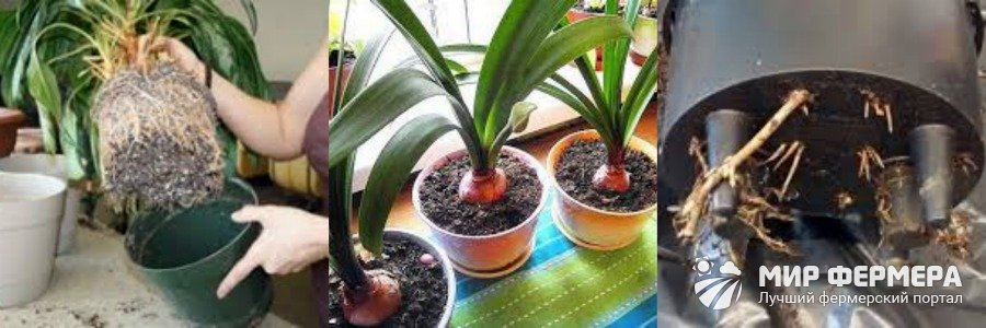 Как определить, что растению нужна пересадка