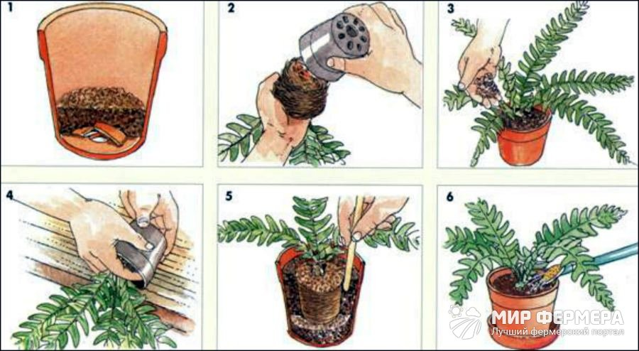 Как пересадить комнатное растение