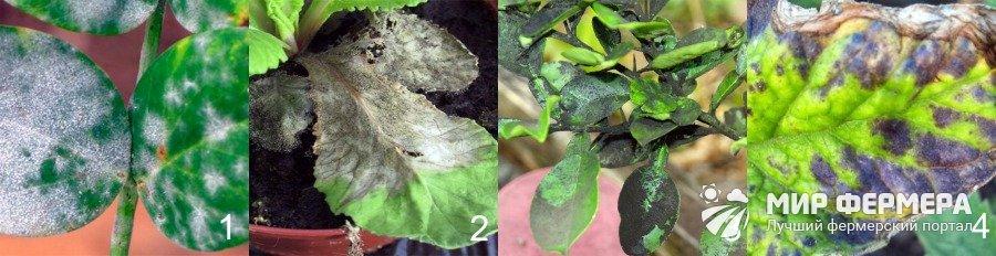 Болезни комнатных растений фото