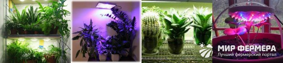 Как осветить комнатные растения лампой