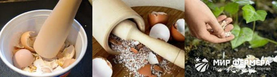 Удобрение из яичной скорлупы своими руками