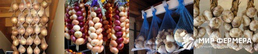 Как хранить лук и чеснок зимой