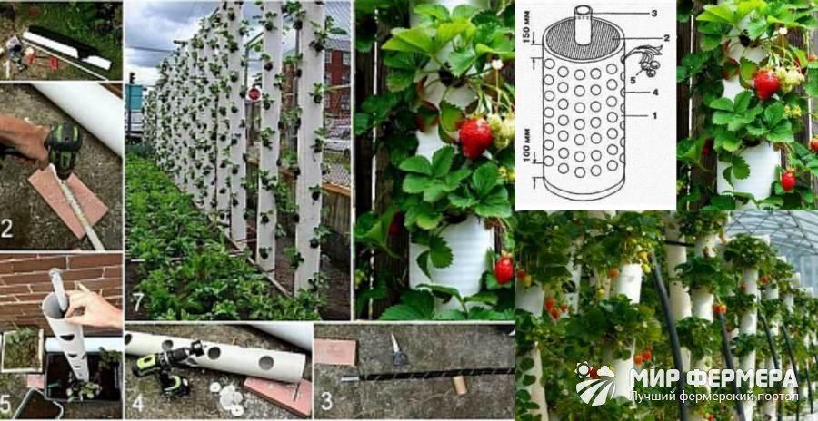 Вертикально выращивание клубники
