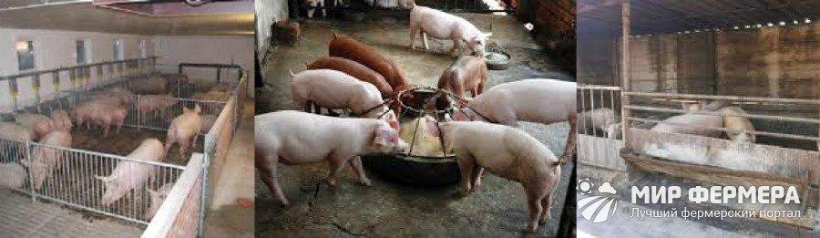 Сарай для свиней фото