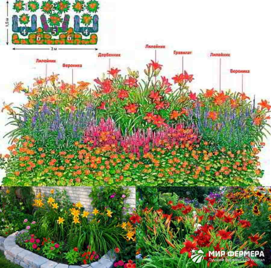 С какими цветами сочетаются лилейники 91