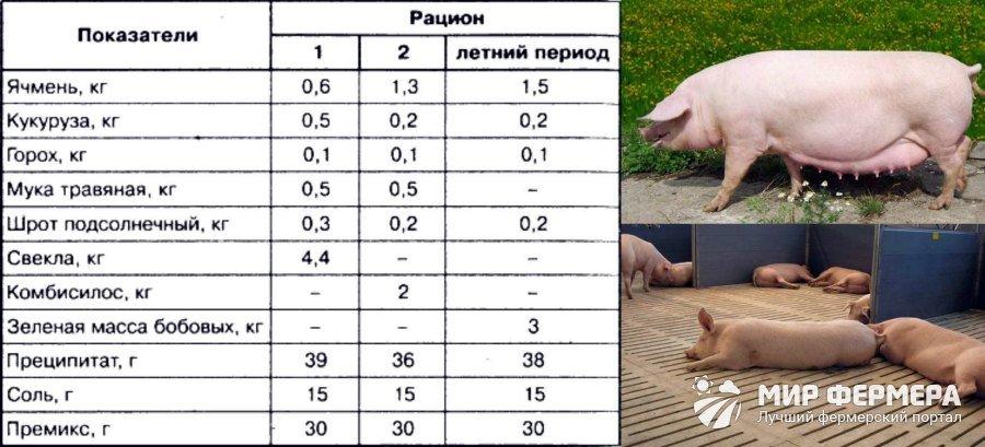 Условия содержания свиноматок