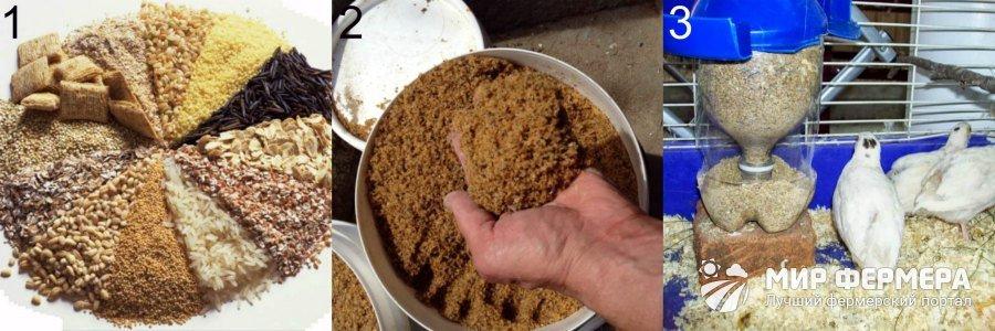 Как откармливать перепелов на мясо?