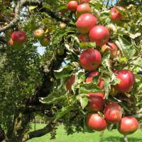 Бизнес план плодовые деревья бизнес план кроличьей ферме