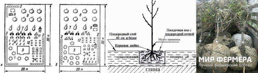 Фруктовые деревья названия