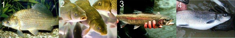 Лучшие рыбы для разведения