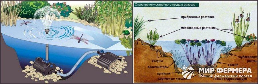 Обустройство пруда для рыбы