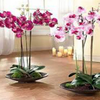 Комнатные растения-уход за орхидеями в домашних условиях 708