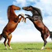 Породы лошадей с фотографиями и описаниями