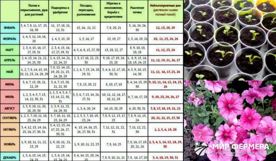 Календарь посадки петунии 2018