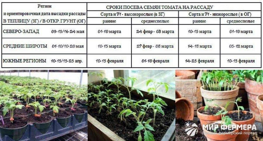 Разновидности луковиц цветов фото